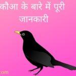 About Crow in hindi | essay on crow in hindi | कौआ के बारे में जानकारी