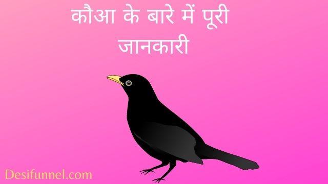 About Crow in hindi   essay on crow in hindi   कौआ के बारे में जानकारी