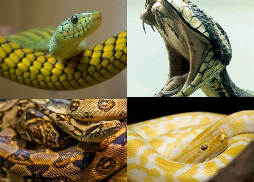 Intresting Facts About Snake In hindi