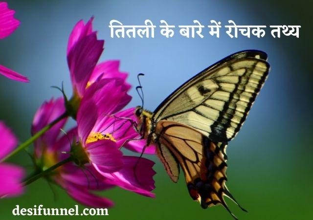 About butterfly in hindi information | तितली के बारे में रोचक तथ्य