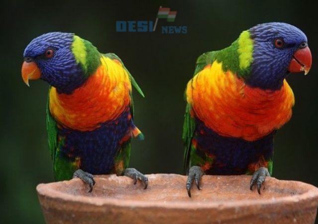 About Parrot in hindi | तोते के बारे में पूरी जानकारी | [ 20 रोचक तथ्य ]
