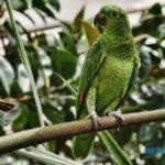 About Parrot in hindi | तोते के बारे में जानकारी हिंदी में| [ 20 रोचक तथ्य ]
