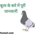About pigeon in hindi information |    कबूतर के बारे में