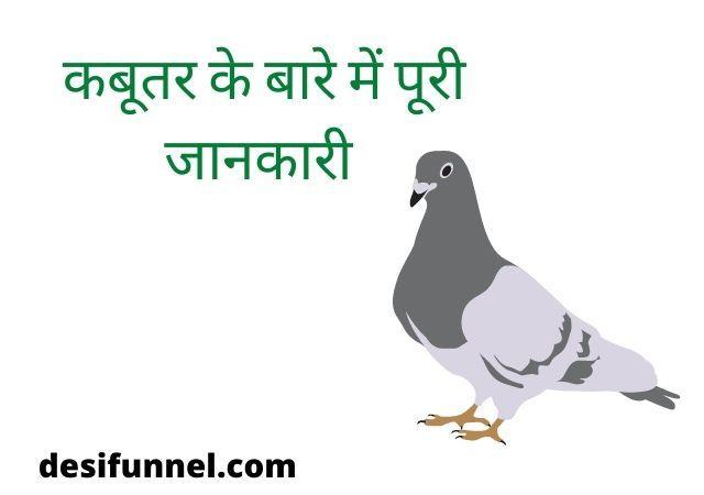 About pigeon in hindi information | dove bird | कबूतर के बारे में पूरी जानकारी