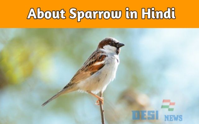 About Sparrow in Hindi । Eassy on sparrow | गौरैया पर निबंध