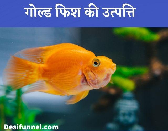 Goldfish Ka Scientific Naam Kya Hai, गोल्ड फिश की उत्पत्ति - Origin Of Goldfish