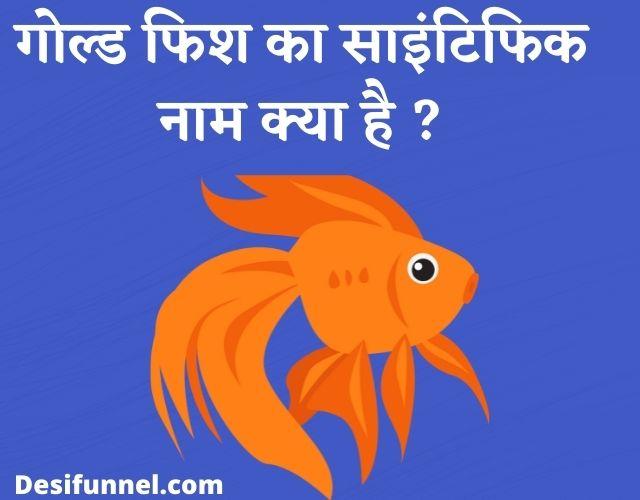 Goldfish Ka Scientific Naam Kya Hai, गोल्ड फिश का साइंटिफिक नाम क्या है ?