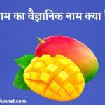 आम का वैज्ञानिक नाम क्या है - Mango Ka Scientific Name Kya Hai ?