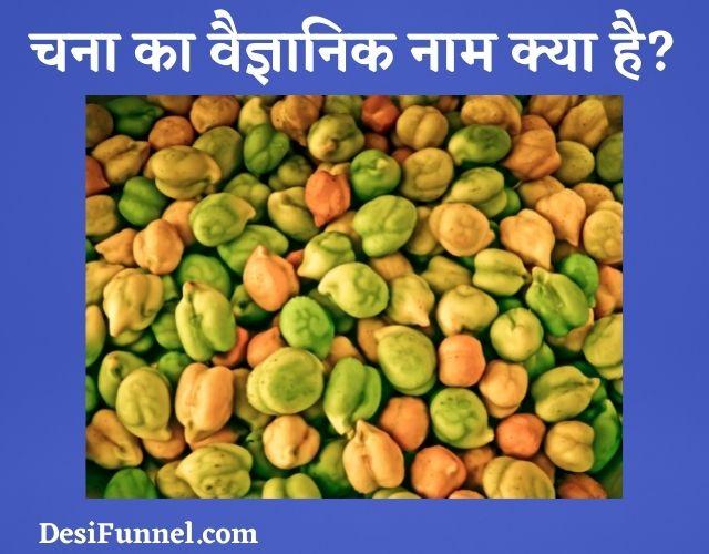 चना का वैज्ञानिक नाम (Scientific Name) क्या है?, Chana ka vaigyanik naam