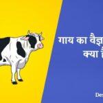 गाय का वैज्ञानिक नाम क्या है? - Gaay Ka Scientific Naam