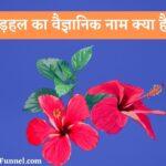 गुड़हल का वैज्ञानिक नाम क्या है? - Gudhal Ka Scientific Naam