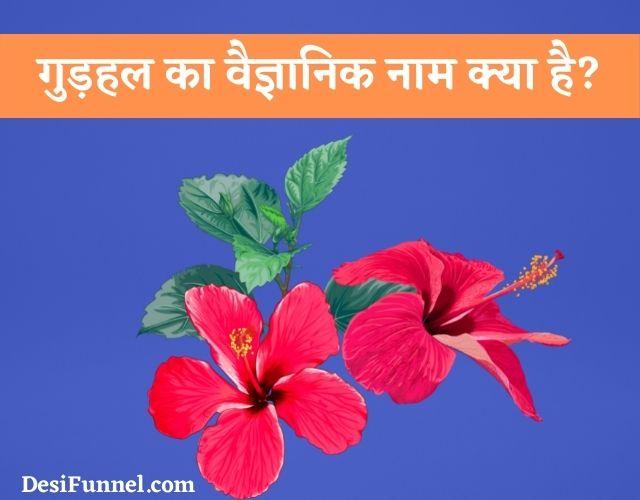 गुड़हल का वैज्ञानिक नाम क्या है, Gudhal Ka Scientific Naam