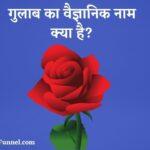 गुलाब का वैज्ञानिक नाम क्या है? - Rose ka scientific/vaigyanik name