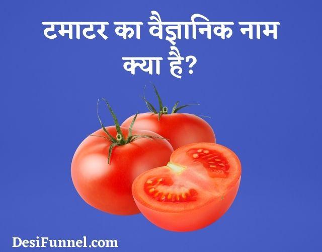 टमाटर का वैज्ञानिक नाम, Tamatar (Tomato) Ka Scientific Naam